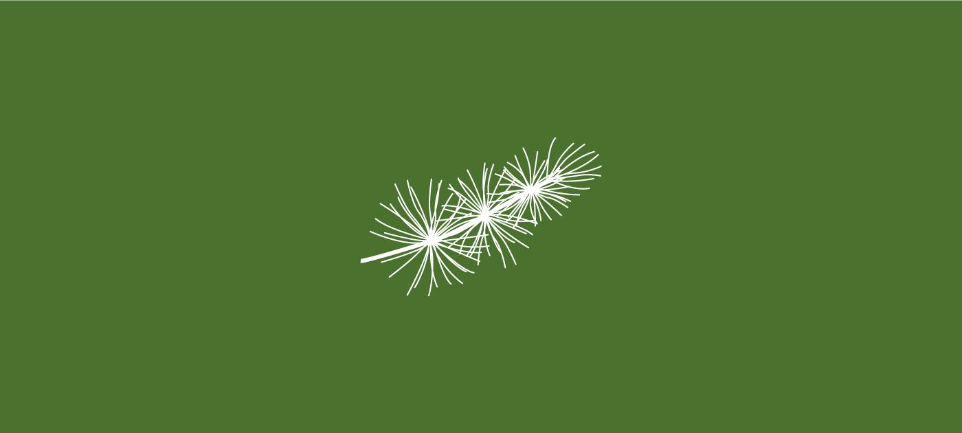 Noisli - Cedar