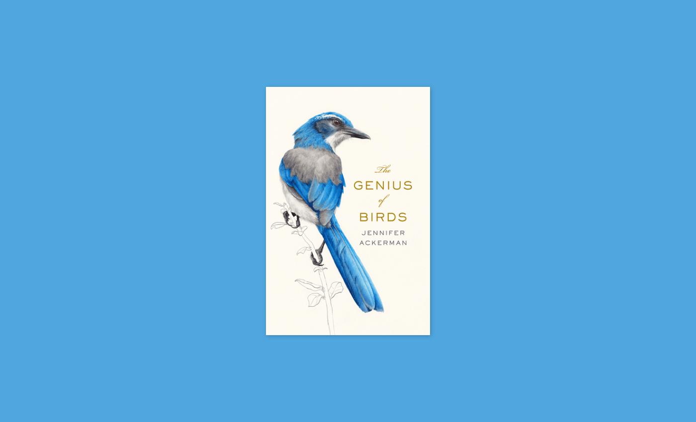 Noisli - The Genius of Birds