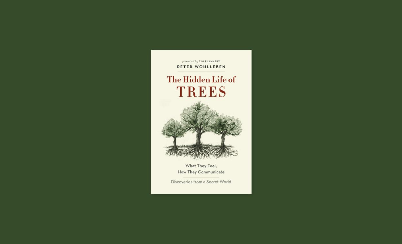 Noisli - The Hidden Life of Trees